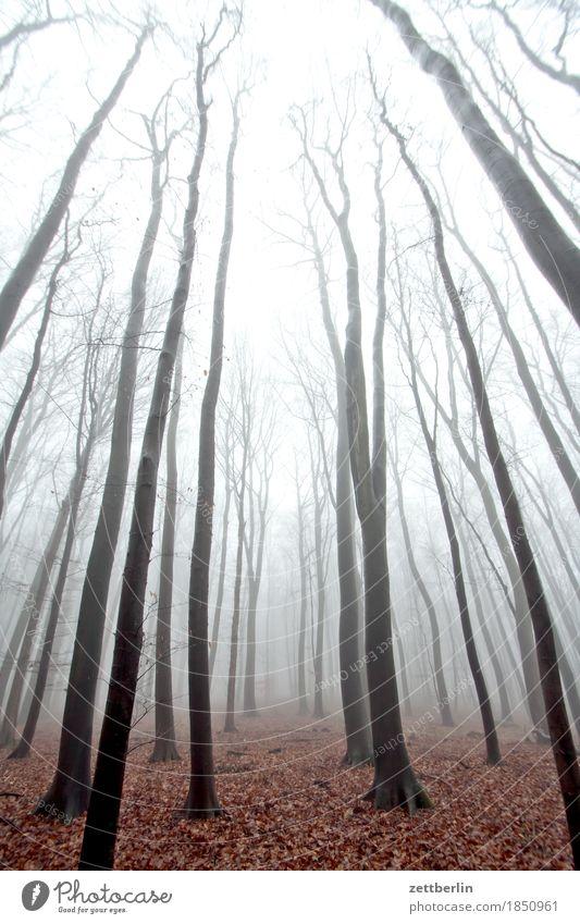 Nebel im Hochwald Wald Laubwald Baum Baumstamm Ast Zweig Buche Buchenwald Forstwirtschaft Holz Herbst Winter Dunst Himmel Farblosigkeit kalt trüb Traurigkeit