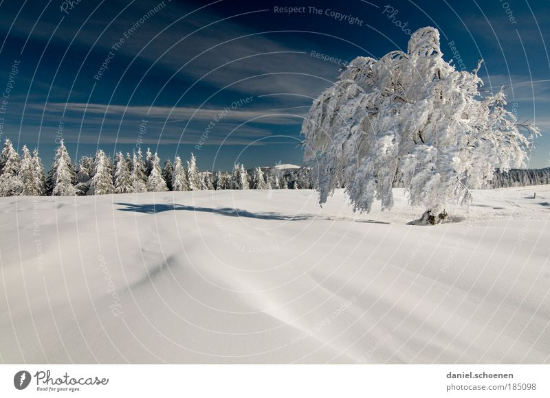 für Winterliebhaber Ferien & Urlaub & Reisen Tourismus Freiheit Schnee Winterurlaub Landschaft Himmel Schönes Wetter Baum Wald hell kalt blau weiß Horizont