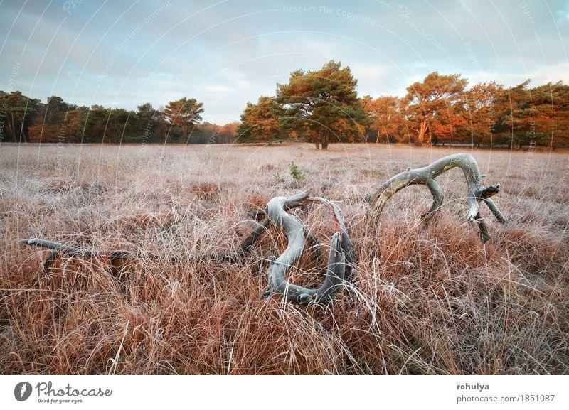 alter Baum auf bereifter Wiese im Herbstsonnenaufgang Winter Natur Landschaft Himmel Gras Wald wild weiß Tod Holz Feld Grasland Frost Eis gefroren kalt fallen