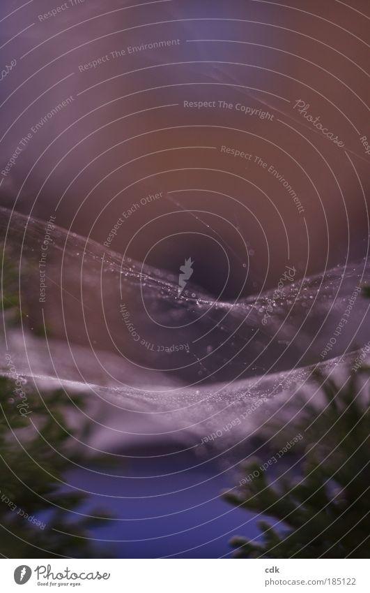 oh Tannenbaum... Himmel Natur blau weiß Winter Umwelt dunkel kalt Herbst Garten Park glänzend Nebel nass authentisch Wassertropfen