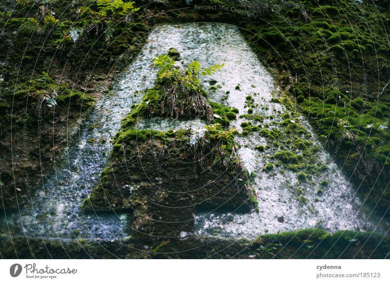 A Natur schön Pflanze ruhig Umwelt Leben Wege & Pfade Zufriedenheit Felsen Schilder & Markierungen Beginn ästhetisch Schriftzeichen Wachstum