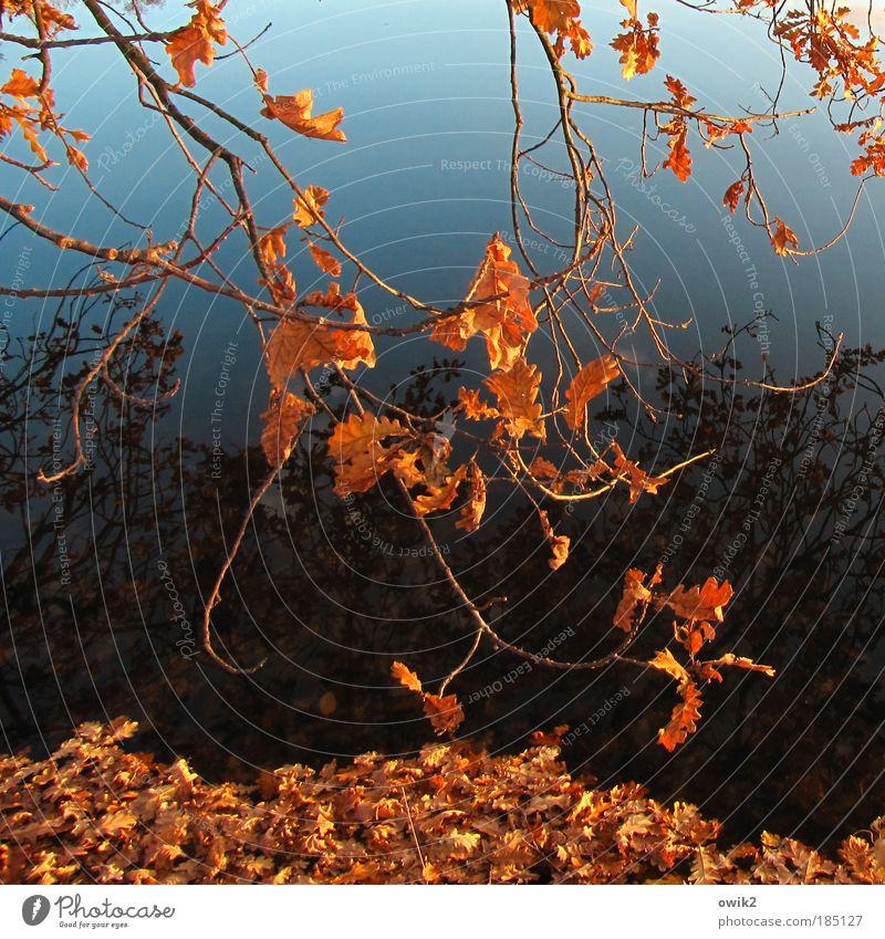 Vergänglichkeit Himmel Natur Pflanze blau Wasser Baum Blatt Umwelt Herbst See Wetter Idylle Klima Schönes Wetter Urelemente