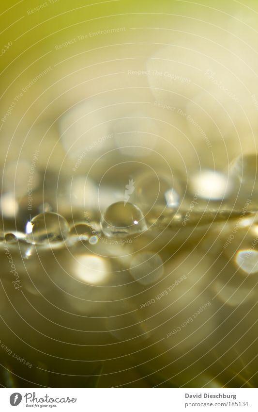 königliche Blässe Natur Pflanze grün Wasser Blatt natürlich Hintergrundbild Regen glänzend Wassertropfen nass Tropfen Kugel Tau silber