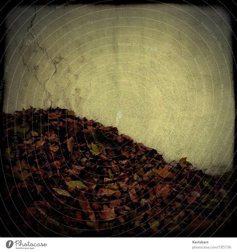 laub. riss. Blatt ruhig Herbst Straße Leben Wand grau Wege & Pfade Mauer Traurigkeit Fassade Design Lifestyle Wandel & Veränderung Vergänglichkeit Hügel
