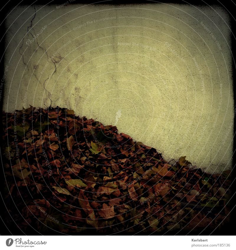 laub. riss. Lifestyle Design Städtereise Herbst Blatt Mauer Wand Fassade Fußgänger Straße Wege & Pfade grau Traurigkeit stagnierend Vergänglichkeit