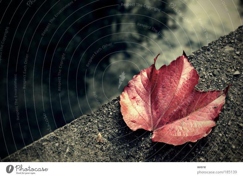 Abschied / Goodbye Wasser Einsamkeit Blatt Tod Herbst Gefühle Traurigkeit Brücke Vergänglichkeit Ende Herbstlaub Bach Endzeitstimmung Weinblatt Suizidalität