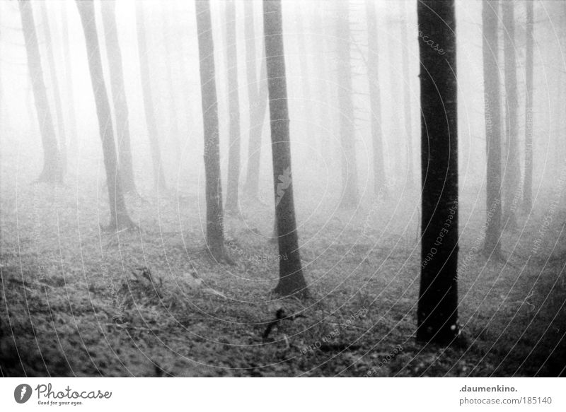 das innere nach aussen Natur Landschaft Erde Nebel Baum Wald alt atmen beobachten berühren Denken entdecken fallen ästhetisch bedrohlich dunkel schwarz weiß
