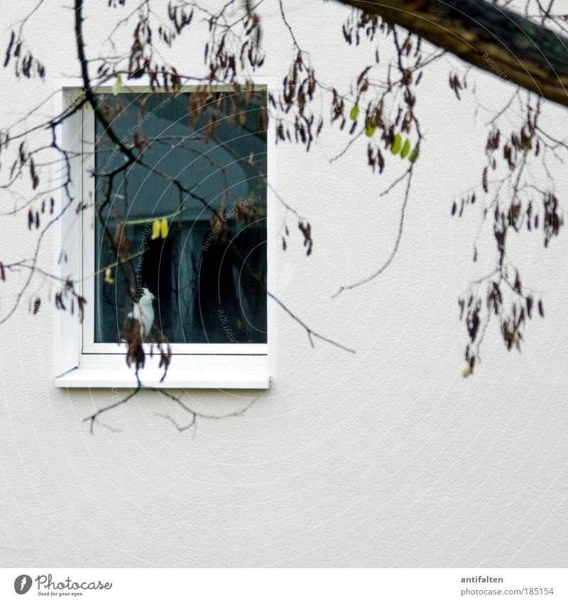 Traurige Mieze Natur weiß Baum grün Blatt Tier Herbst Wand Fenster Garten Mauer Katze Regen Stimmung braun Wind