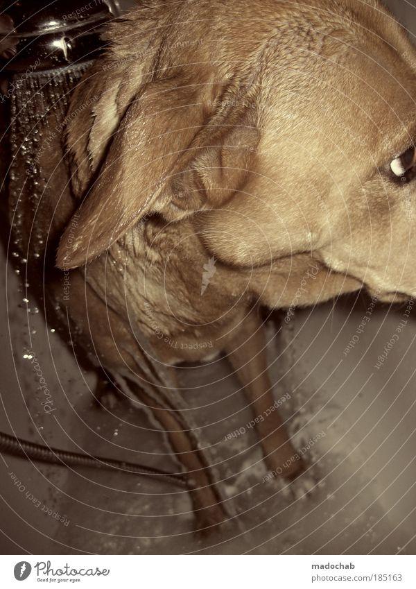 P F Ü T Z E N F O T O Hund Tier Coolness Sauberkeit Bad Fell Badewanne Tiergesicht Vertrauen Mut Leidenschaft frieren Waschen Willensstärke Haustier Pfote
