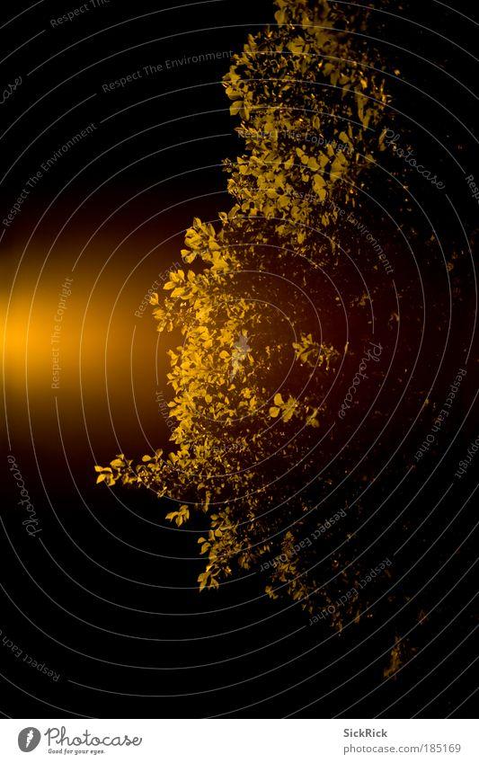 umrisse Baum Blatt gelb Nachthimmel Lichtspiel Lichteinfall Blätterdach