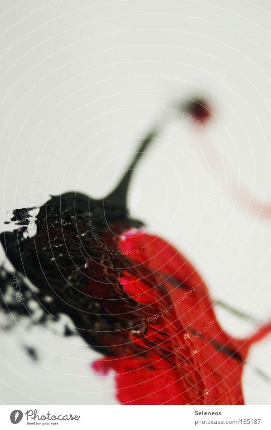 verlaufen schön rot Farbe Stil Kunst Horizont Zufriedenheit Design Perspektive Kunststoff Kreativität Unendlichkeit geheimnisvoll Zeichen Kontakt Flüssigkeit
