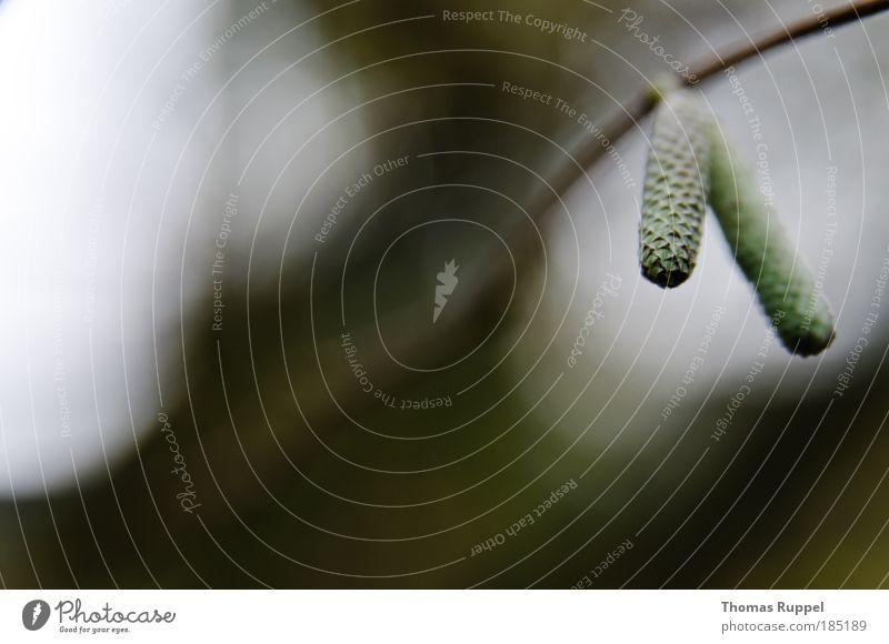 Herbst Natur Himmel grün Pflanze Herbst Wiese Wärme Zufriedenheit Kraft Umwelt Sträucher Ast Ehrlichkeit Grünpflanze Wildpflanze