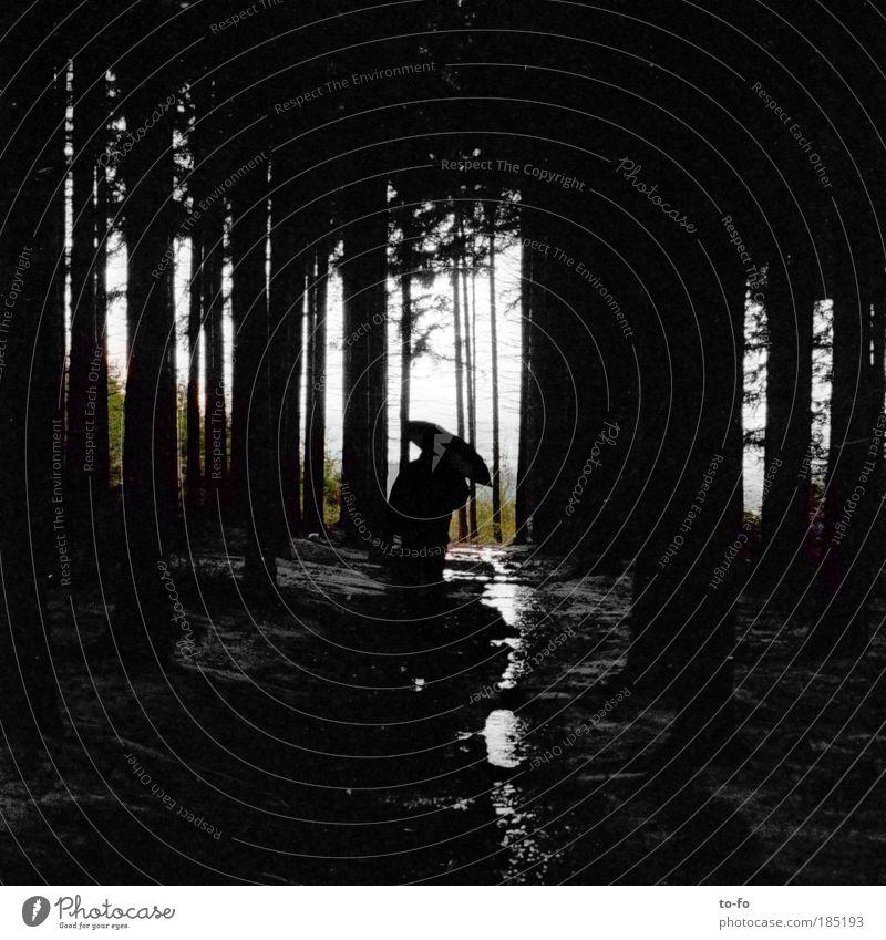 November wandern Mensch 1 Natur Landschaft Pflanze Herbst Wetter schlechtes Wetter Regen Baum Wald gehen Stimmung Einsamkeit Erholung Regenschirm nass