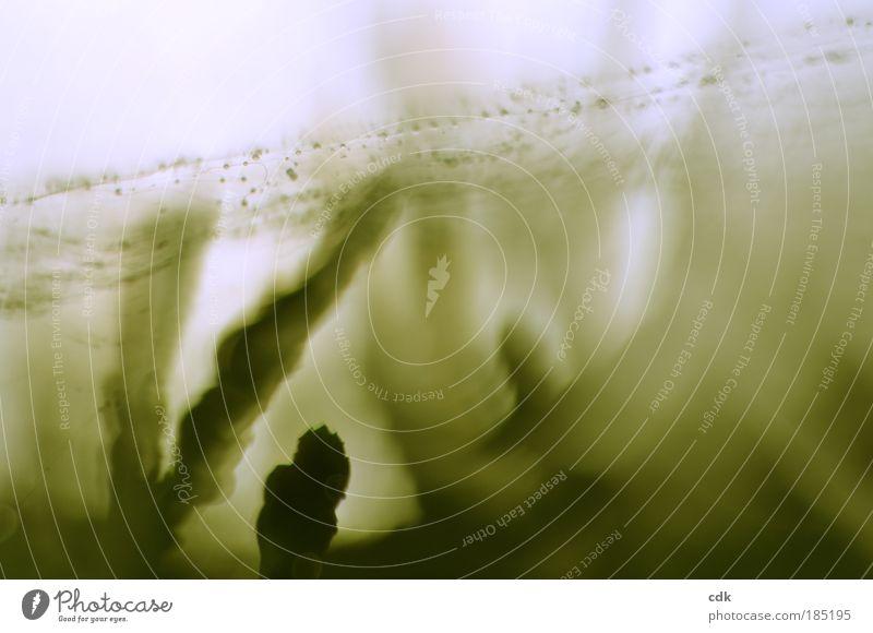 Fäden spinnen Natur Umwelt Herbst Bewegung Garten Linie Park Netzwerk Vergänglichkeit Tropfen Niveau geheimnisvoll zart chaotisch durchsichtig