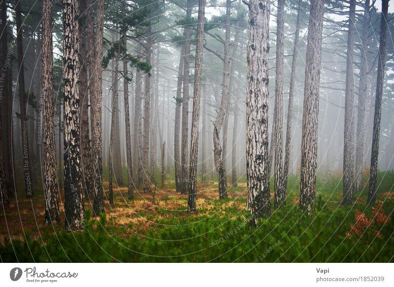 Mysteriöser nebelhafter Wald Tapete Umwelt Natur Landschaft Pflanze Frühling Sommer Herbst Nebel Regen Baum Gras Moos Park dunkel natürlich gelb grün schwarz