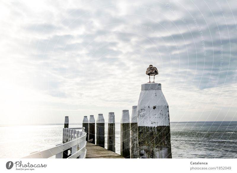 Weißheit   Liegt die Weisheit hinter dem Horizont ? Himmel Ferien & Urlaub & Reisen blau Sommer weiß Meer Landschaft Erholung Wolken Tier Holz grau braun Vogel