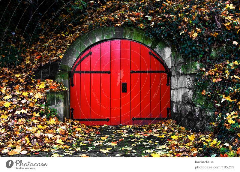 Natur grün rot gelb Farbe Herbst Wand Holz Stein Mauer Park Landschaft braun Architektur Tür