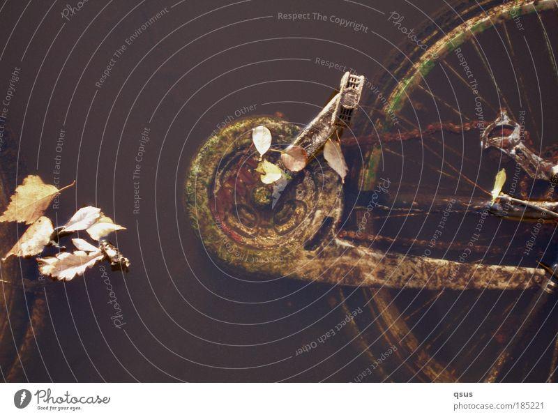 Wasserrad Technik & Technologie Kettengetriebe Speichen Pedal Zahnrad Umwelt Herbst Blatt Teich Verkehrsmittel Verkehrswege Verkehrsunfall Fahrrad alt nass