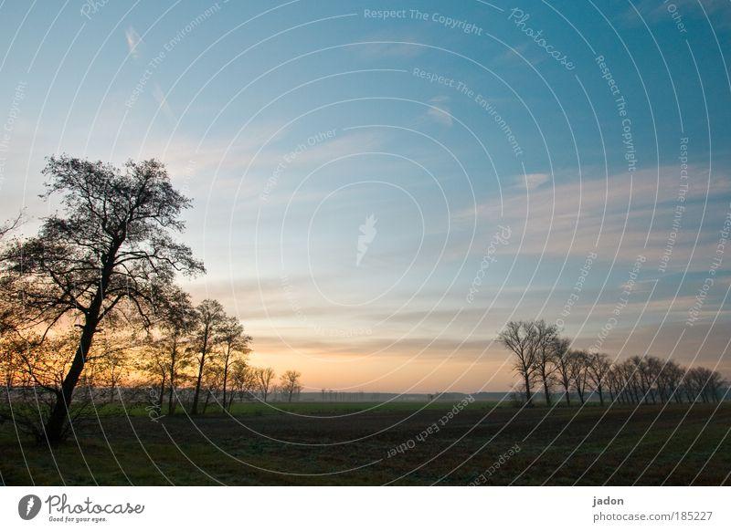 morgens Landschaft Pflanze Himmel Horizont Sonnenaufgang Sonnenuntergang Herbst Baum Feld natürlich Romantik schön ruhig Langeweile Einsamkeit Idylle