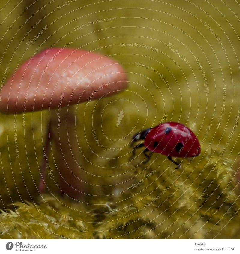 Glücksbringer Umwelt Natur Käfer 1 Tier beobachten Bewegung entdecken krabbeln Unendlichkeit lustig natürlich niedlich rund schön Freude Kraft Freizeit & Hobby