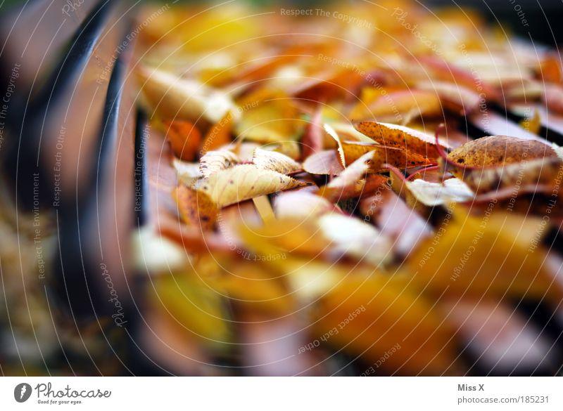Blätter Blätter Blätter Natur alt Pflanze Blatt ruhig Herbst Holz Garten Traurigkeit Park Wind Schönes Wetter Trauer trocken Verfall welk
