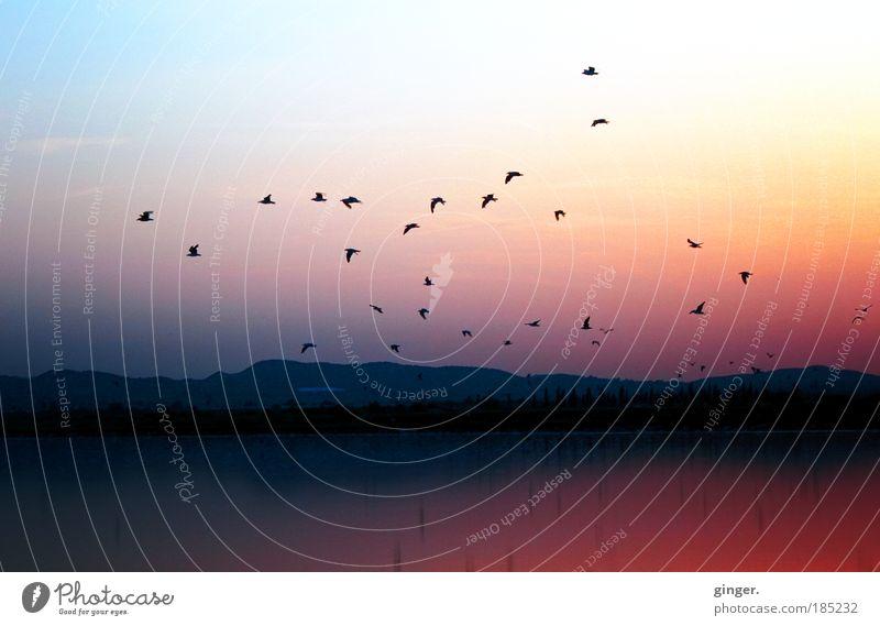 Free as a Bird oder Bonbonfarben für süße Teenies Himmel Natur blau Ferien & Urlaub & Reisen Sommer rot ruhig Erholung gelb Ferne Wärme Küste See Luft Vogel rosa