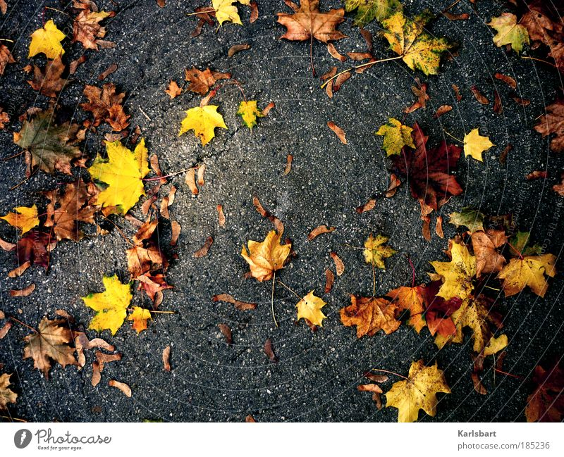 acer. Natur Baum Blatt Erholung Straße Herbst Spielen Umwelt Bewegung Wege & Pfade Park Kraft Wind Ausflug Design Lifestyle