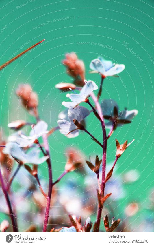 fehlfarben Himmel Natur Pflanze Sommer schön Blume Blatt Blüte Wiese Gras klein Garten Park Feld Wachstum frisch