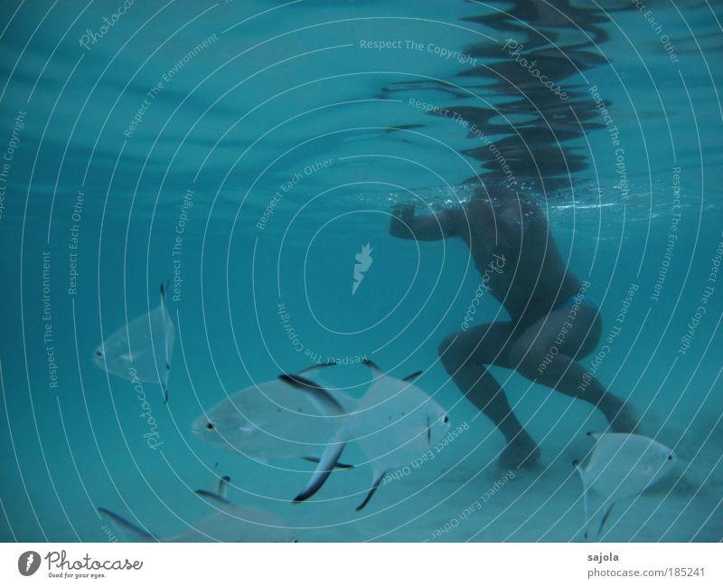 schwimmen mit fischen Mensch Mann Natur Wasser weiß Meer blau Ferien & Urlaub & Reisen Tier Freiheit Sand Wellen Küste Erwachsene maskulin Umwelt