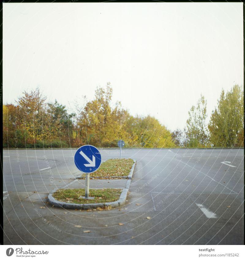 insel Pflanze Baum Verkehrswege Straße Straßenkreuzung Wege & Pfade Wegkreuzung Verkehrszeichen Verkehrsschild Verkehrsinsel Pfeil Herbst unpersönlich reduziert