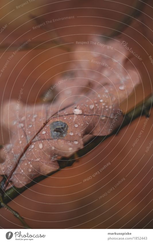 eiche blatt herbstfarben regentropfen harmonisch Wohlgefühl Freizeit & Hobby wandern Garten Erntedankfest Umwelt Natur Landschaft Pflanze Tier Wasser