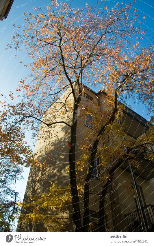 o.T. Himmel Baum Sonne Blatt Haus Herbst Mauer Gebäude hell gold Ast Jahreszeiten Zweig Hinterhof blenden Mieter