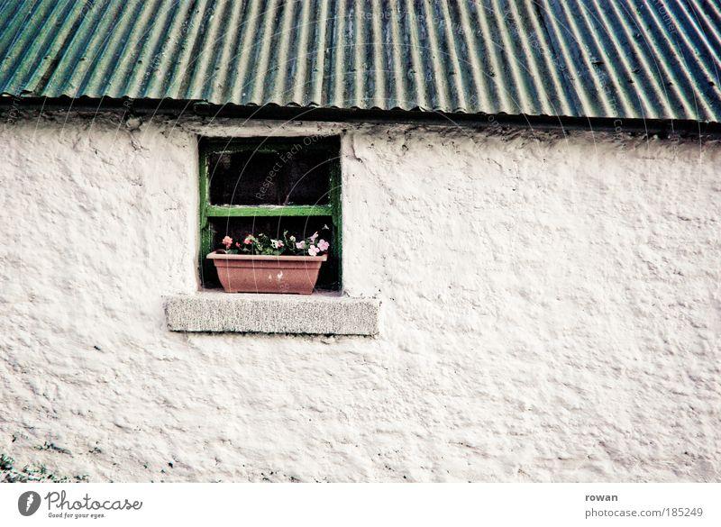 fenster zum hof weiß Blume grün Haus Wand Fenster Mauer Gebäude Architektur klein Fassade Dach Dekoration & Verzierung Bauernhof Idylle