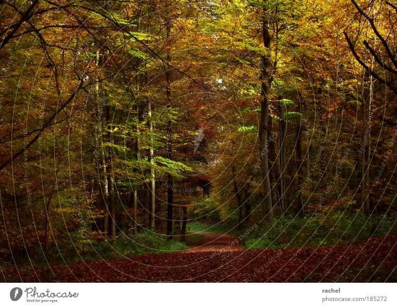 Grimms Wald Natur Baum Pflanze ruhig Blatt Wald Herbst Holz träumen Wege & Pfade Umwelt Sträucher Spaziergang geheimnisvoll Jahreszeiten Fußweg