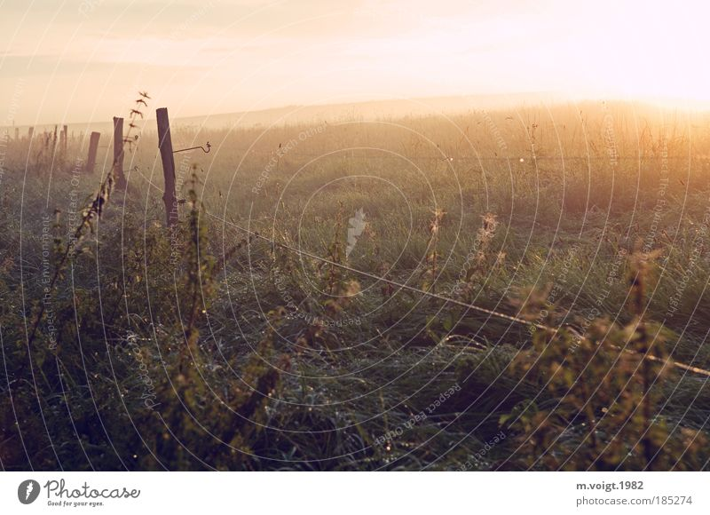 Im Frühtau - No.100 Natur schön Sonne Sommer Ferne Wiese Freiheit Landschaft Feld Umwelt Klima Idylle Sonnenstrahlen Weide Tau Schönes Wetter