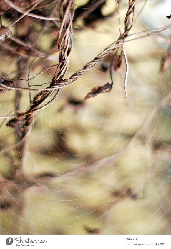 Verfallen Basteln Natur Pflanze Herbst Gras Sträucher Blatt Park Feld Ornament Knoten alt dunkel dünn trocken wild braun Stimmung träumen Tod Ende