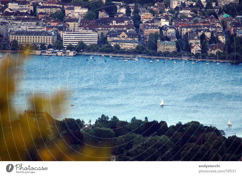 Zürisee See kalt Baum Blatt Sommer Wasser Zürich zürisee blau Wind