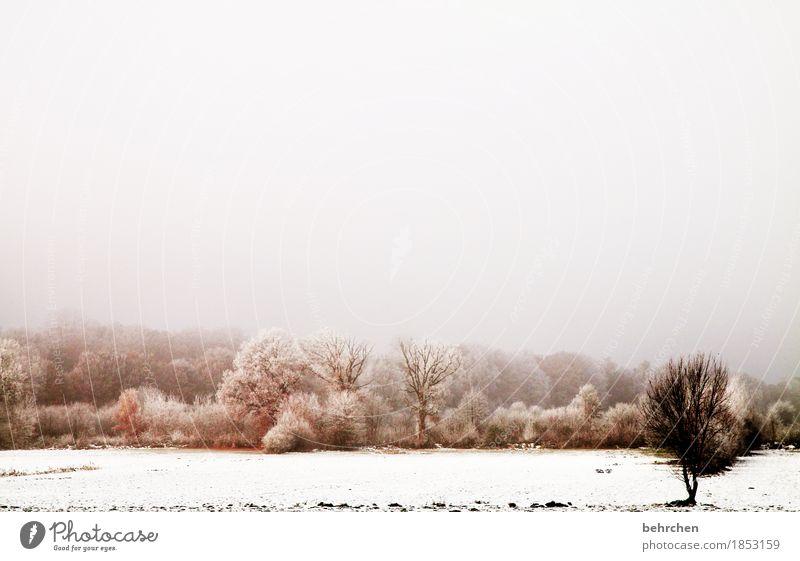 weißheit | das erste weiß ist das schönste Himmel Natur Baum Landschaft Wolken ruhig Winter Wald kalt Schnee Schneefall Feld Nebel Erde Eis