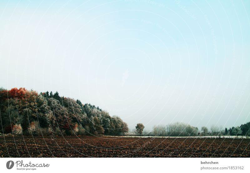 märchenwald Natur Landschaft Pflanze Herbst Winter Schönes Wetter Eis Frost Schnee Baum Sträucher Feld Wald frieren kalt schön Zaun Weide erfrieren