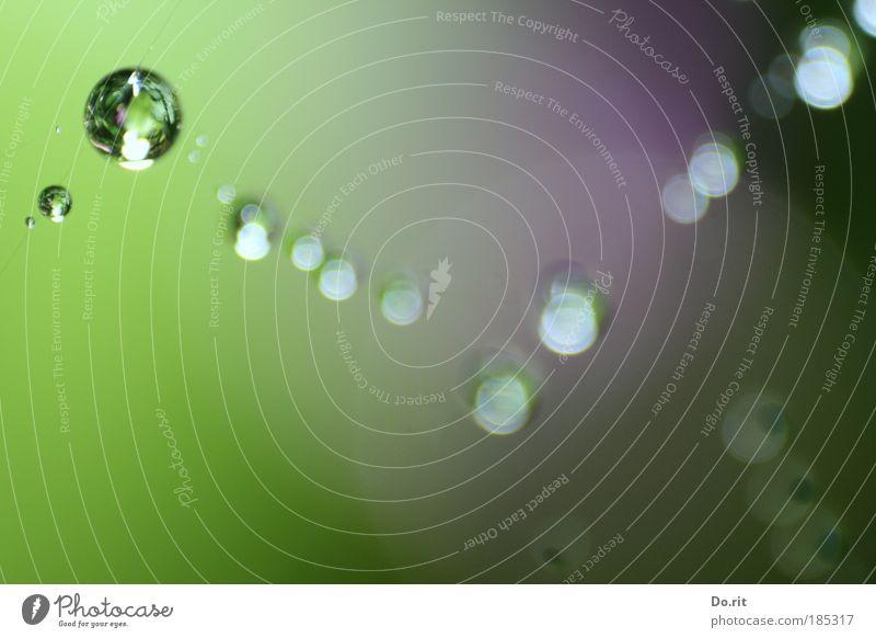 pc-Geburtstag schön Einsamkeit Stil Regen elegant Wassertropfen Lebensfreude Zusammenhalt Gesellschaft (Soziologie) Verschiedenheit Wasser Makroaufnahme Gläubige Perlenkette
