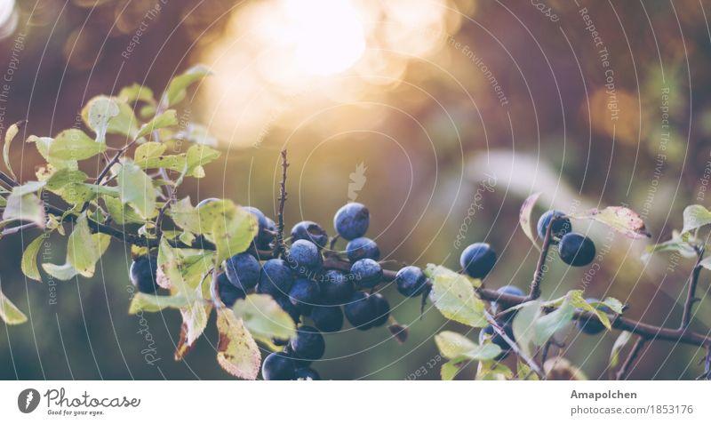 ::16-33:: Natur Ferien & Urlaub & Reisen Pflanze Sommer Gesunde Ernährung Erholung ruhig Ferne Winter Umwelt Leben Herbst Gesundheit Tod Garten Tourismus