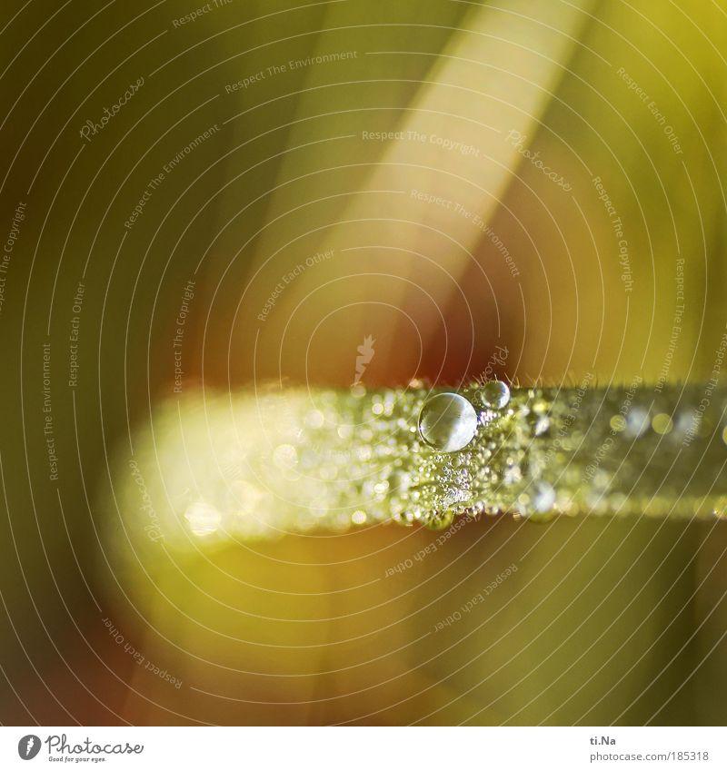 Quereinsteiger *99* Natur Wasser grün Pflanze gelb Herbst Wiese Gras Landschaft Umwelt Wassertropfen nass Wachstum wild natürlich Flüssigkeit