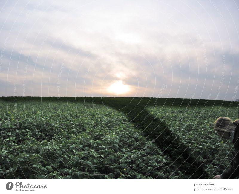 Feldarbeit Sonne Wolken Herbst Grünpflanze demütig Feldkreuz