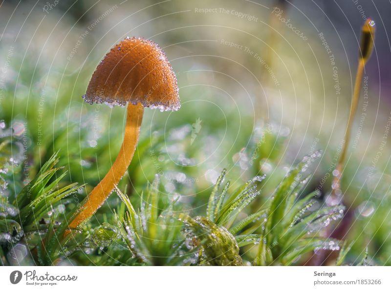 Mit einer Eisschicht überzogen Umwelt Natur Landschaft Pflanze Tier Sonne Herbst Winter schlechtes Wetter Frost Gras Moos Park Wald frieren glänzend leuchten