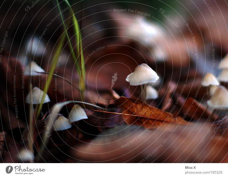 auf der Suche Natur Pflanze Blatt Umwelt kalt Herbst klein Park Lebensmittel Wachstum nass Ausflug frisch Bioprodukte Pilz Gift