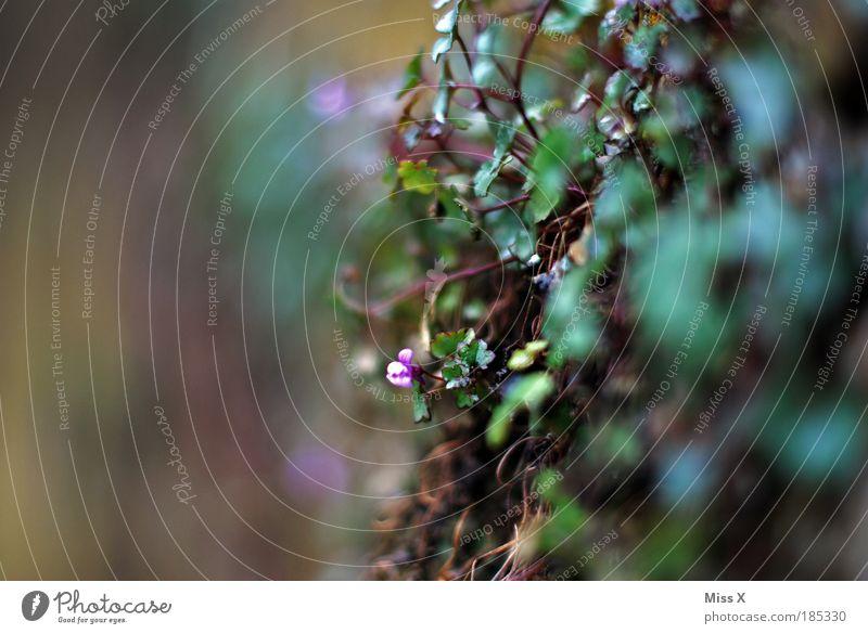 Blümchen für Carlitos und boing Natur Pflanze Sommer Blatt Umwelt Wand Herbst klein Mauer Blüte Park Wachstum Sträucher trist Verfall Makroaufnahme