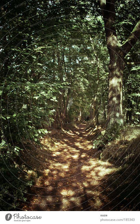 Lichtspiel Landwirtschaft Forstwirtschaft Umwelt Natur Landschaft Schönes Wetter Baum Wald Wege & Pfade natürlich Einsamkeit Wachstum Waldboden Spaziergang