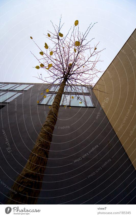 Froschperspektive Himmel Baum Stadt Haus Wolken dunkel kalt Wand oben Fenster Stein Mauer Linie braun Kraft Design