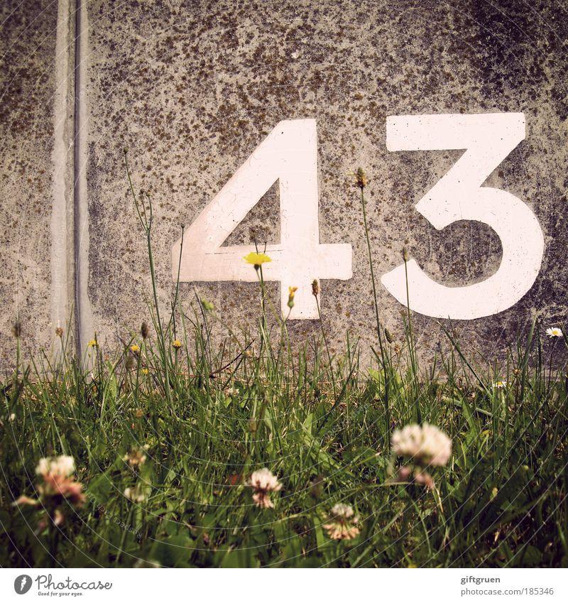 technetium Pflanze Blume Wiese Ordnung Ziffern & Zahlen 43 dreiundvierzig Mauer Beton Stein Aufschrift sortieren rechnen ordnen platzieren Wiesenblume Klee