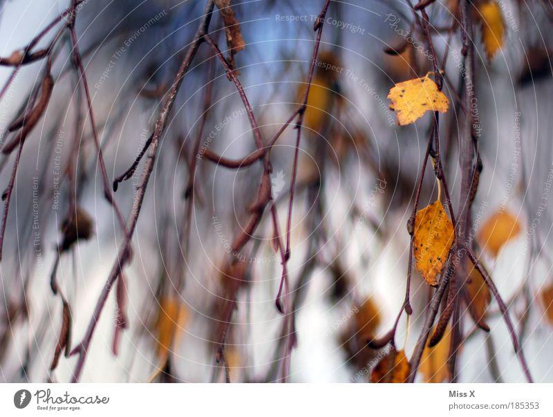 Wasserfall Umwelt Natur Himmel Herbst Wind Baum Blatt Park Birke herbstlich Zweige u. Äste wehen Bewegung Rauschen Außenaufnahme Nahaufnahme Menschenleer